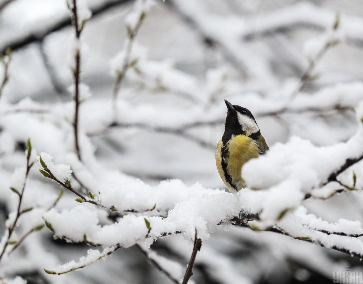 На следующей неделе в Украине ударят морозы / фото УНИАН