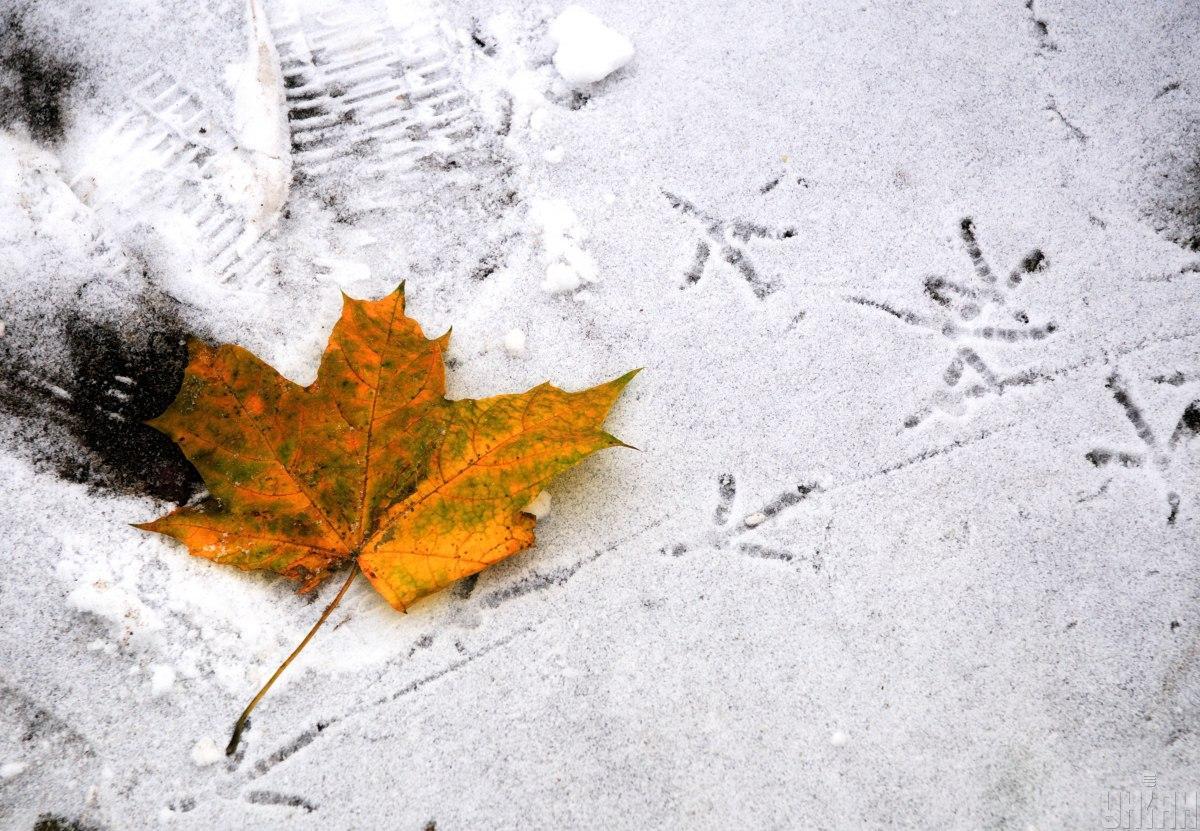 Сильні морози не завдали шкоди посівам зернових / фото УНІАН