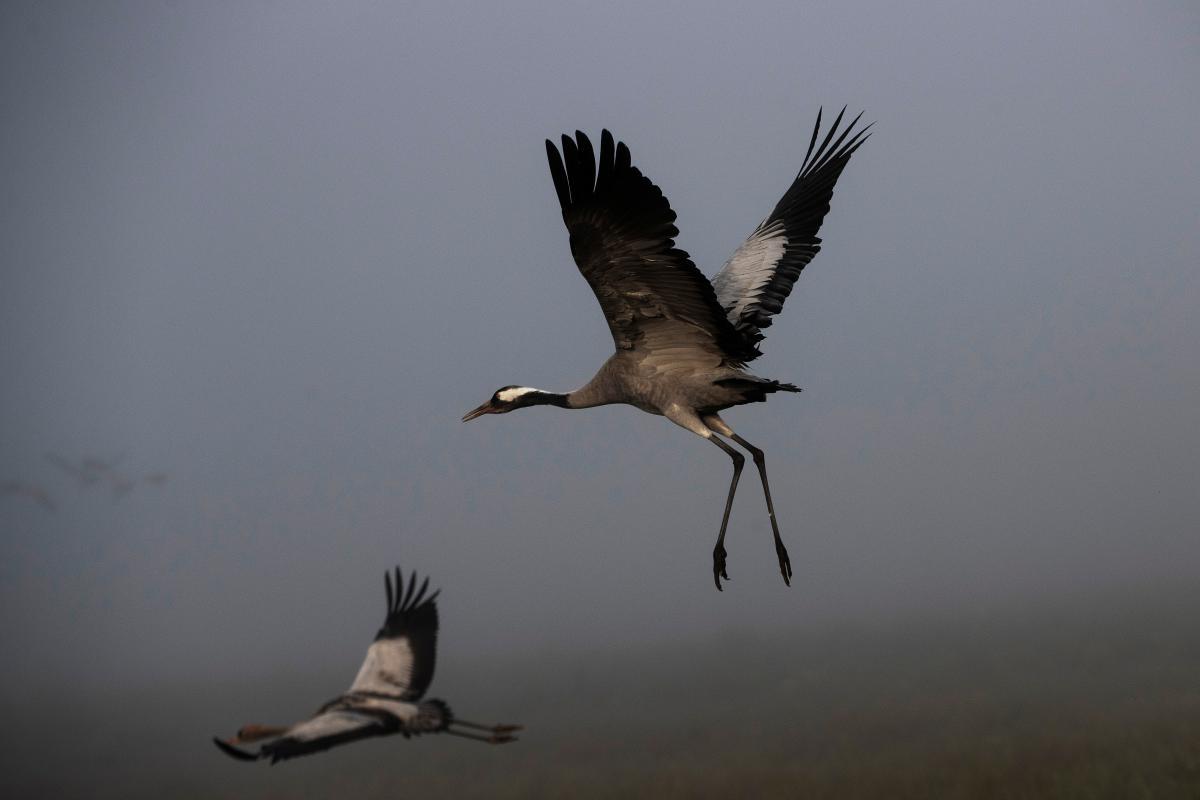 В течение недели в заповеднике вымерло около 185 серых птиц / фото REUTERS