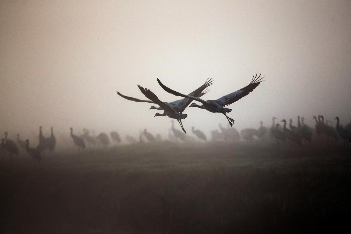 Ранее сообщалось, что птицы погибли от отека легких / фото REUTERS