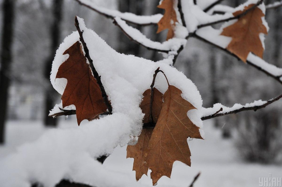 У деяких областях очікується мокрий сніг / фото УНІАН