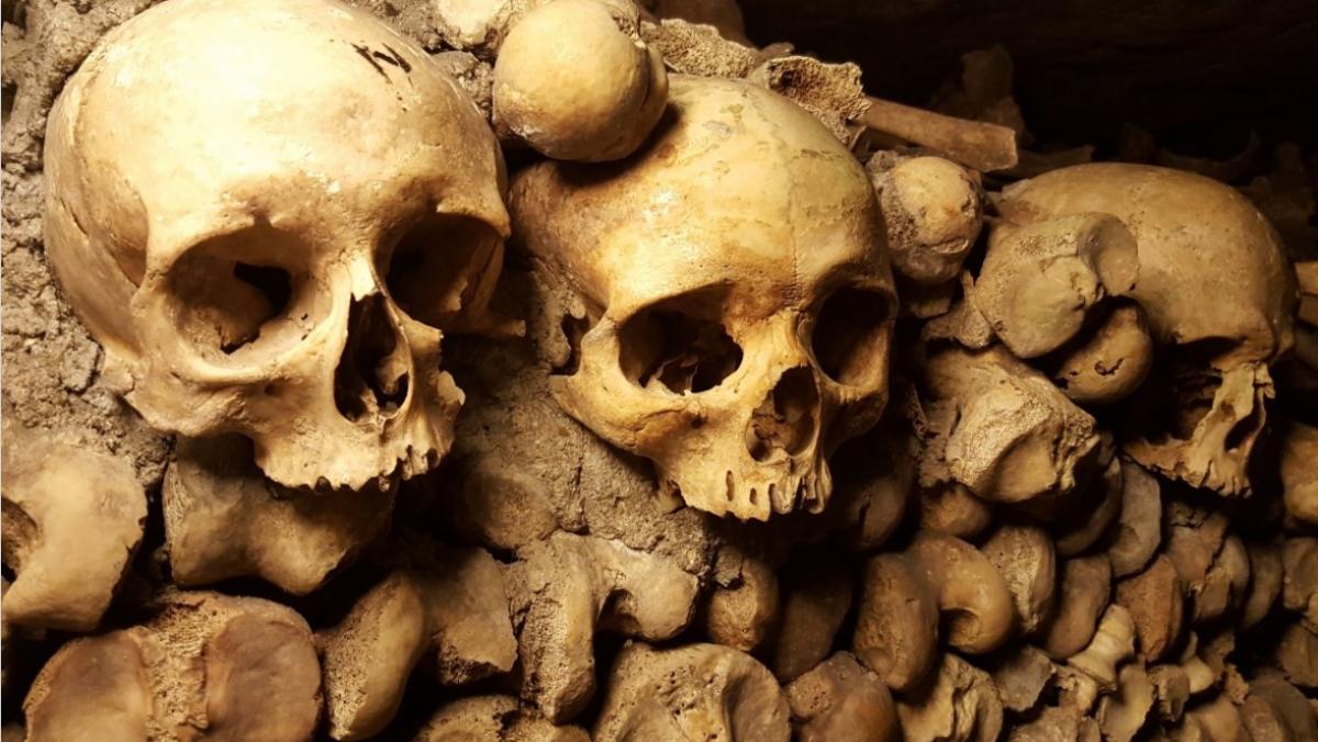 Кістки чоловіка виявили в Берлінському парку / ілюстрація pxhere