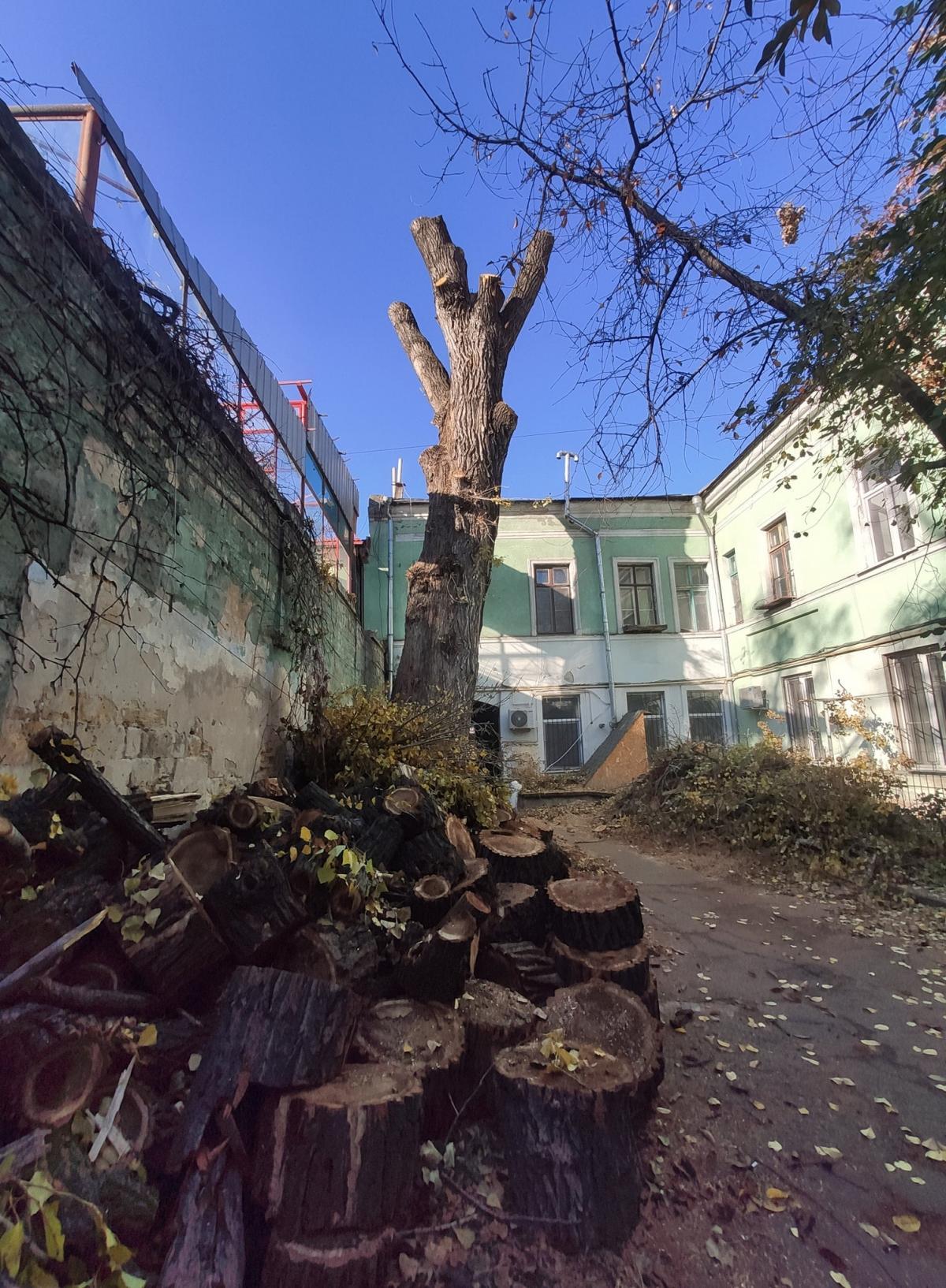 На знімку - спиляне дерево, від якого залишився практично один стовбур, а поруч шматки деревини/фото Бабич / Facebook