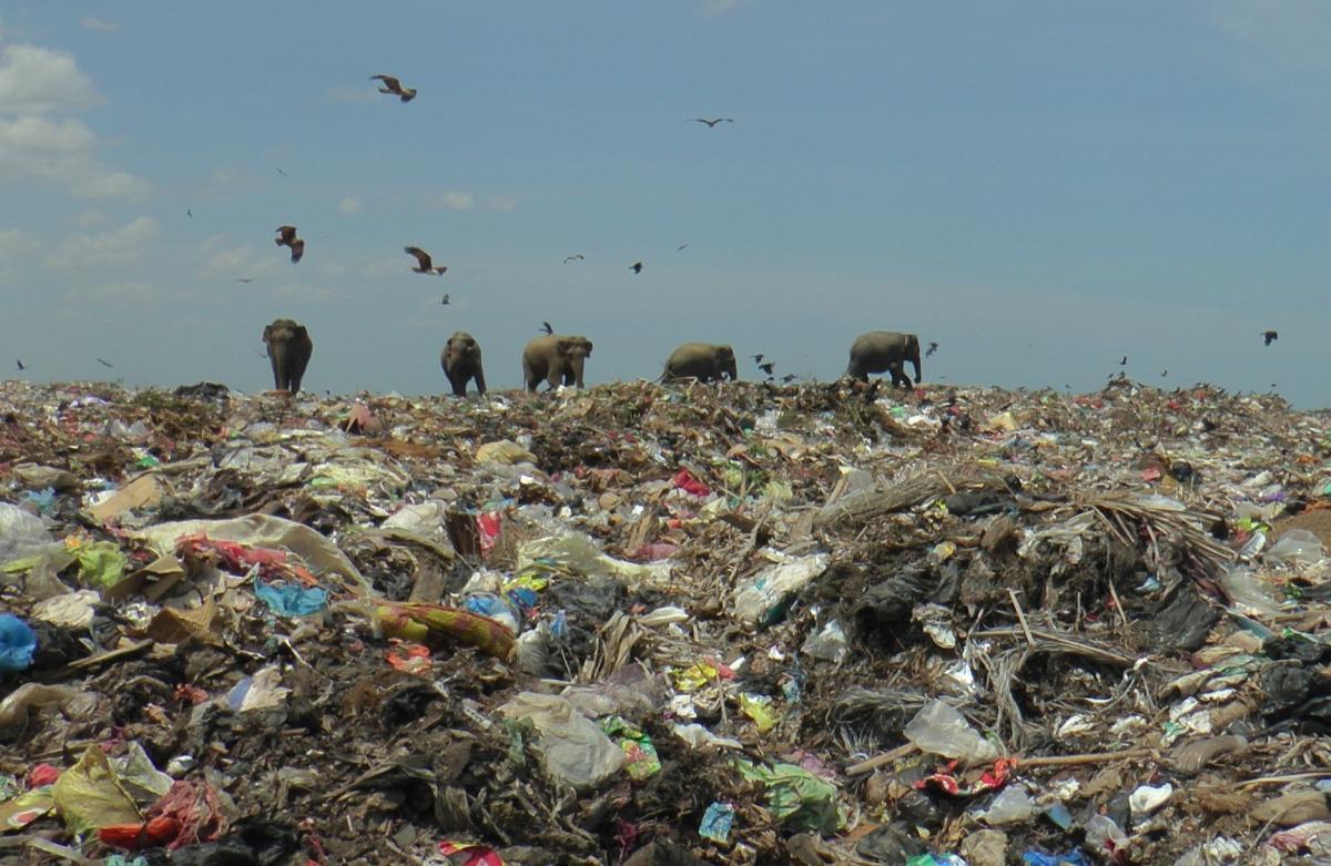 Слоны ищут на свалке остатки пищи / Фото REUTERS