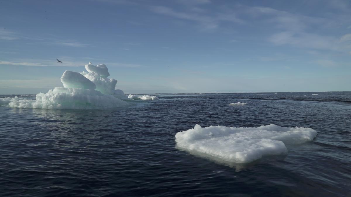 Полярна шапка Арктики змушує рости льоди навколо Антарктиди / Фото REUTERS