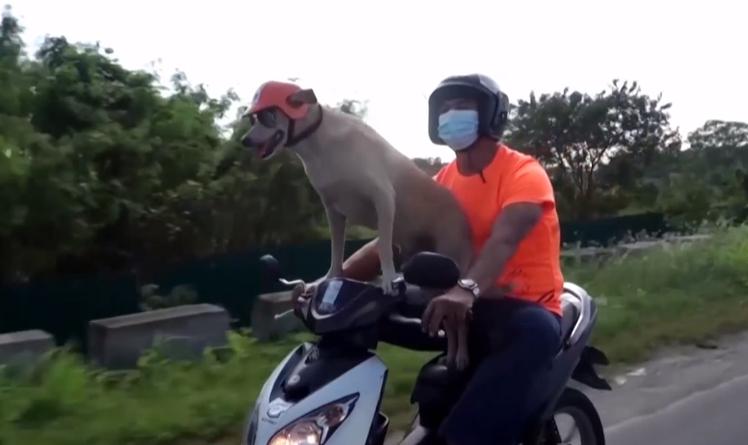 Філіппінський пес-мотоцикліст / скріншот з відео