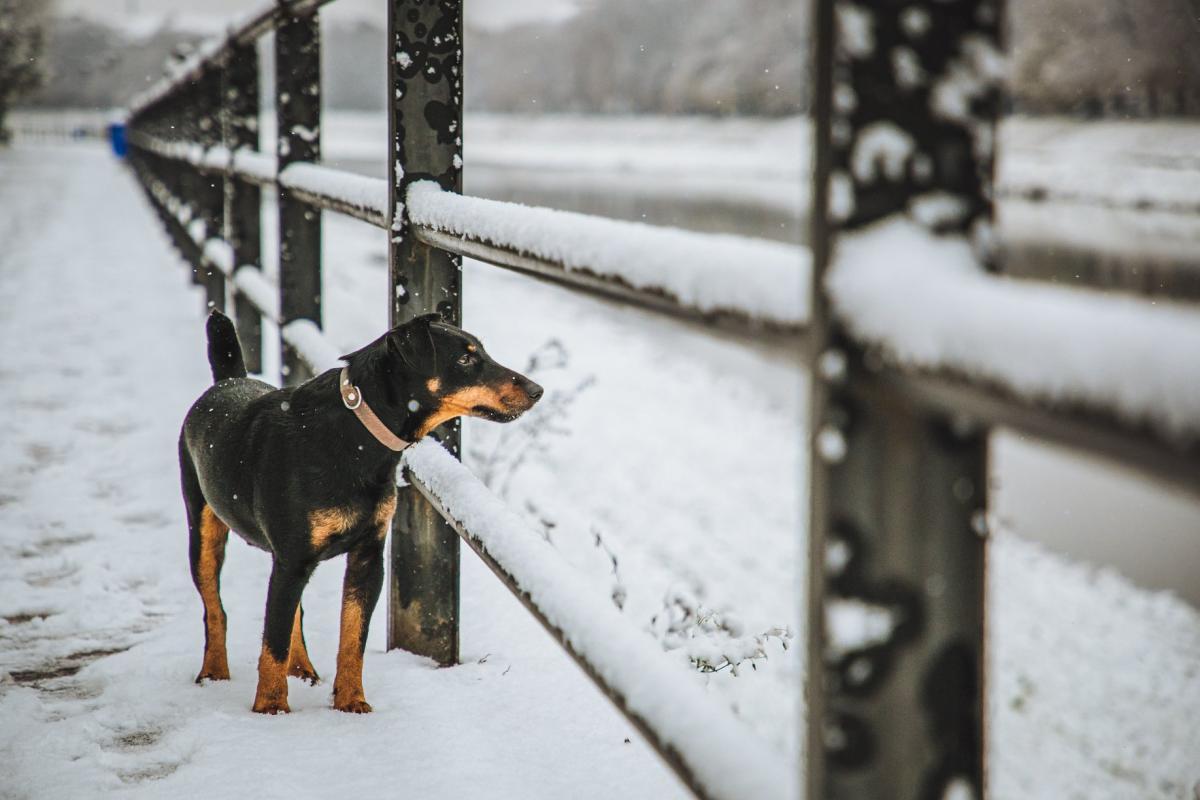 Настоящая зима ожидается только на востоке Украины / фото Facebook, Сергей Денисенко