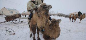 Гонки на верблюдах и испытания на 40-градусном морозе: как северные китайцы празднуют зимний фестиваль Наадам (видео)