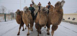 Украинский путешественник показал самый холодный регион Китая и поучаствовал в экстремальных гонках на верблюдах (видео)