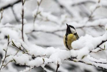 В Україні через значне похолодання відкрили більше двох сотень пунктів обігріву (відео)