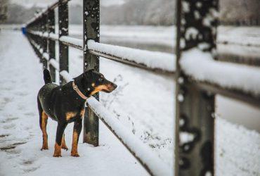 Настоящая зима: синоптик рассказал, какой будет погода в декабре