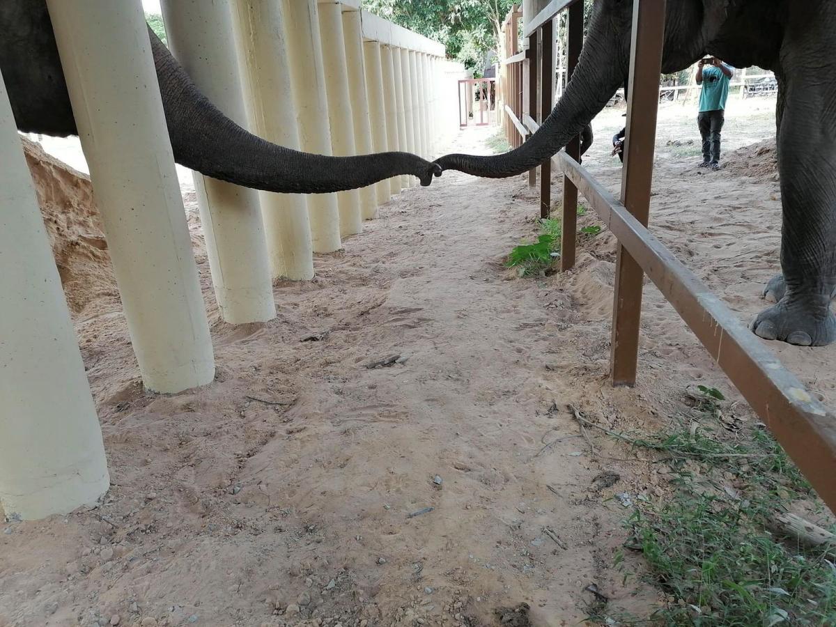 Слон Каавана впервые за долгие годы встречается с сородичем / фото REUTERS