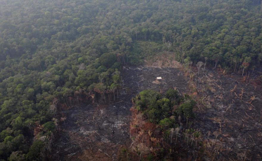 Тропические леса продолжают уничтожать / Фото REUTERS