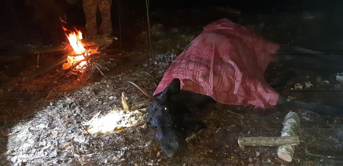Єгерям вдалося врятувати вже повністю виснажену тварину з пастки /фотоЧернігівське обласне управління  мисливського та лісовогогосподарства