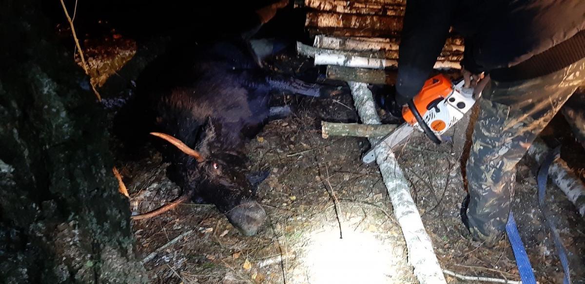 фотоЧернігівське обласне управління мисливського та лісовогогосподарства