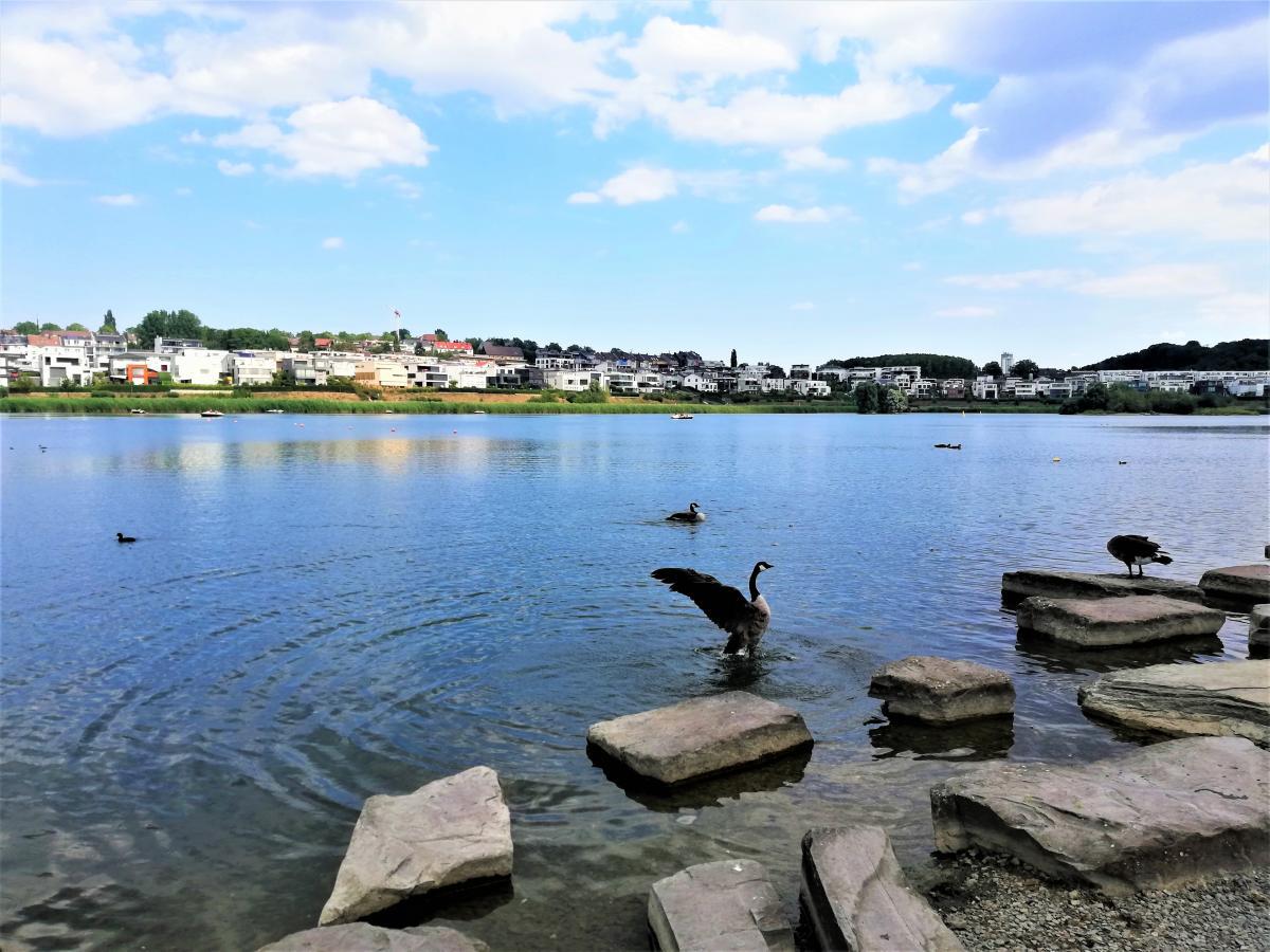 Озеро Фенікс створено штучно / фото Марина Григоренко