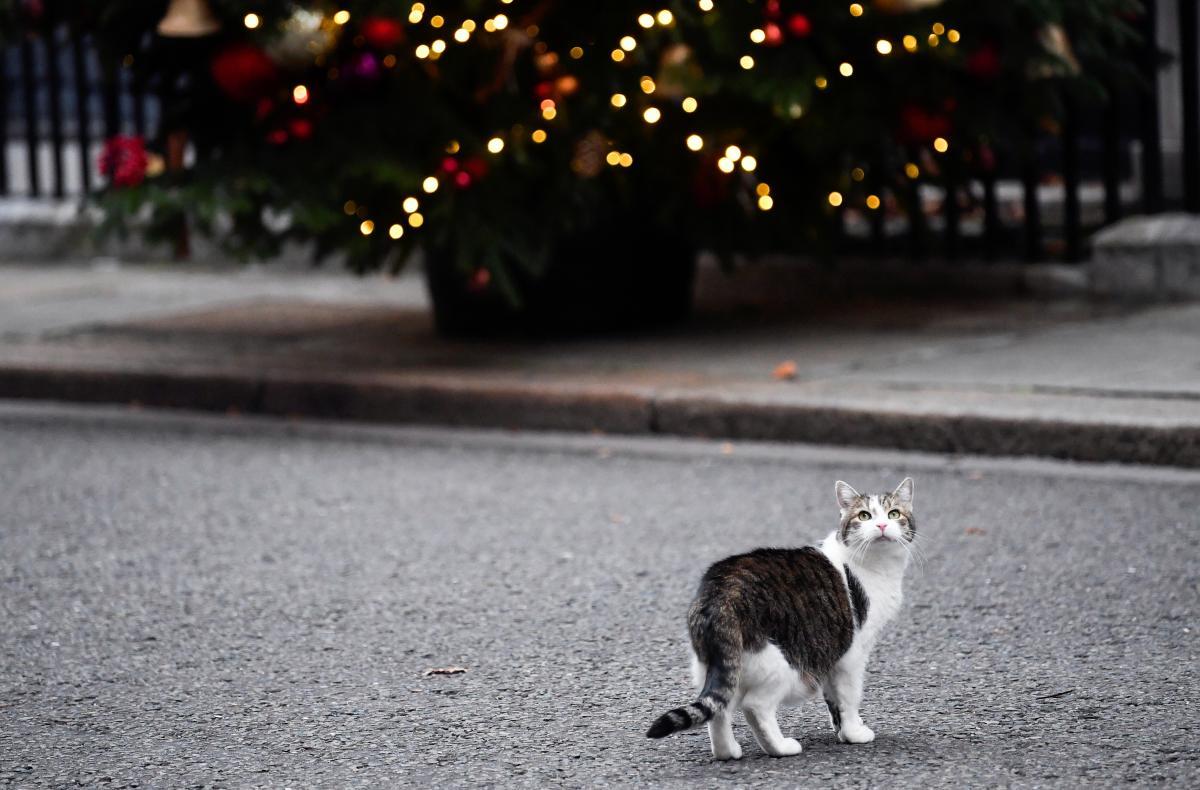 Кіт Ларрі - фото REUTERS