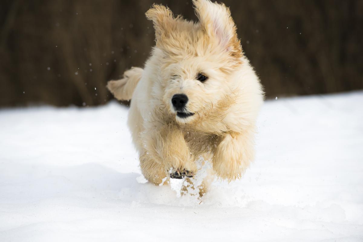 Собаки почали гучно гавкати,бігаючи біля господарів / Фото ua.depositphotos.com