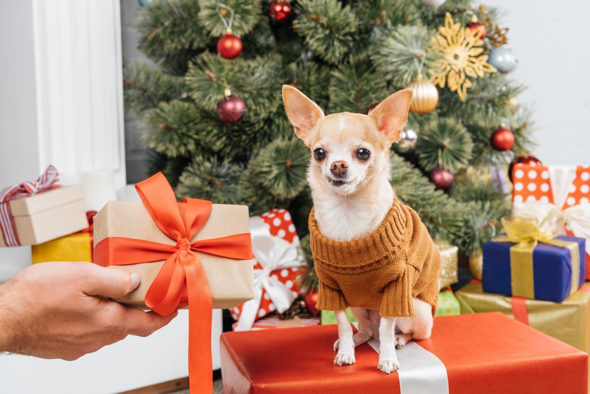 Прикмети на Новий рік на гроші / фото ua.depositphotos.com