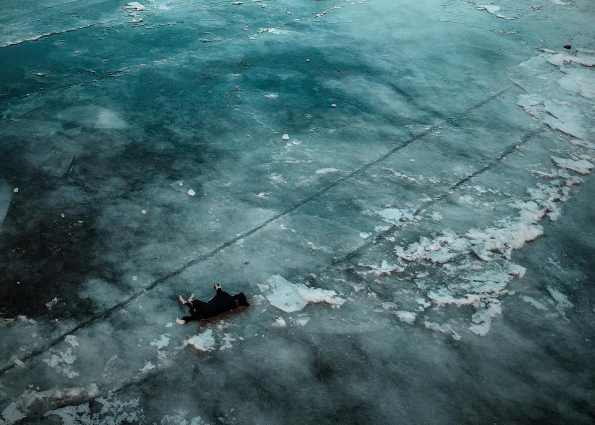 Полиция разыскивает лиц, сбросивших собаку с моста в заледеневшую реку / фото facebook.com/love.chernihiv