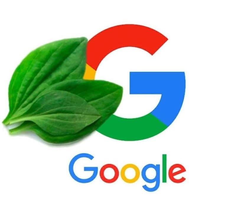 Реакция соцсетей на глобальный сбой в Google / Фото из соцсетей