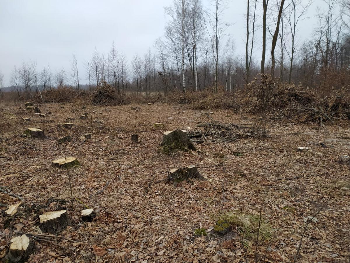 Браконьеры вырубили леса более чем на шесть миллионов гривень / фото dei.gov.ua