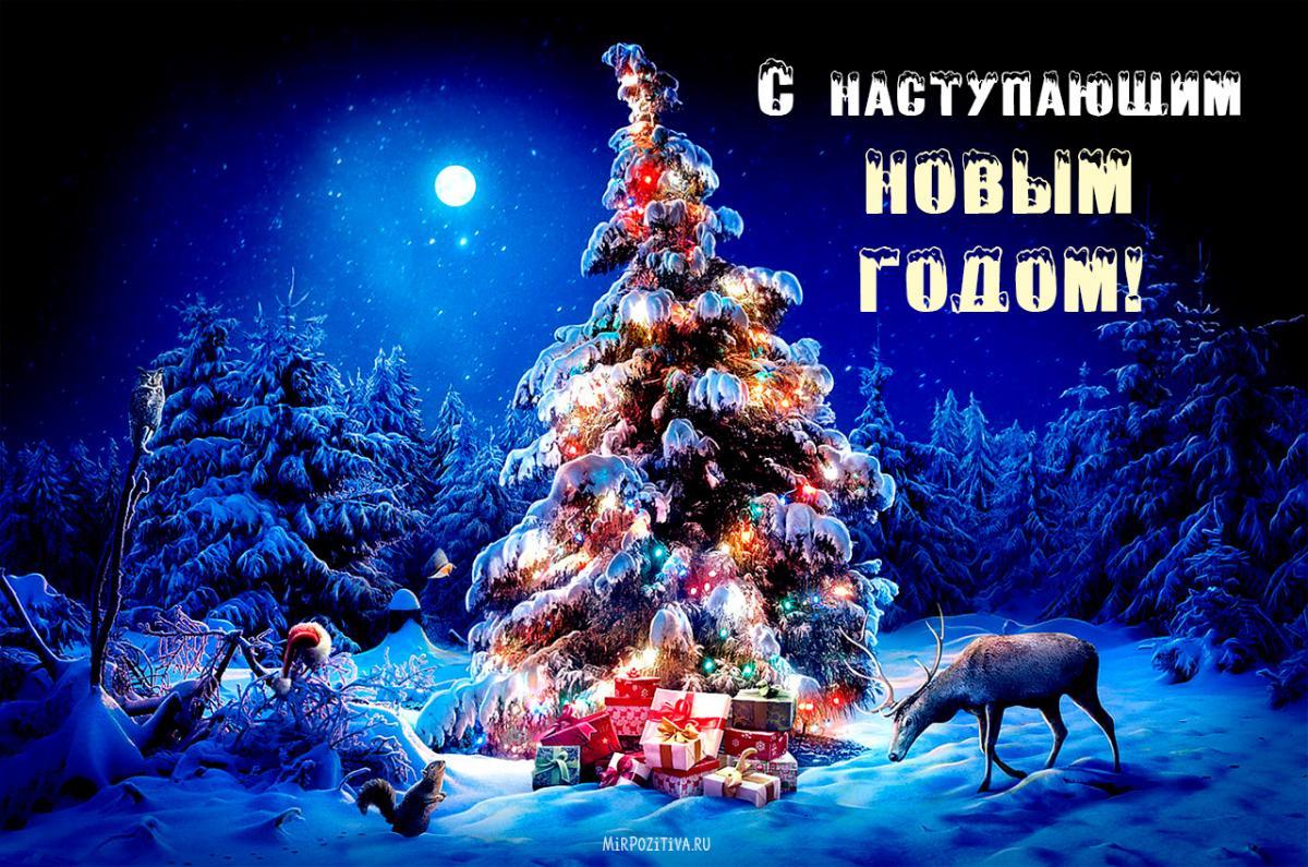 З роком Бика 2021 поздоровлення/ фото mirpozitiva.ru