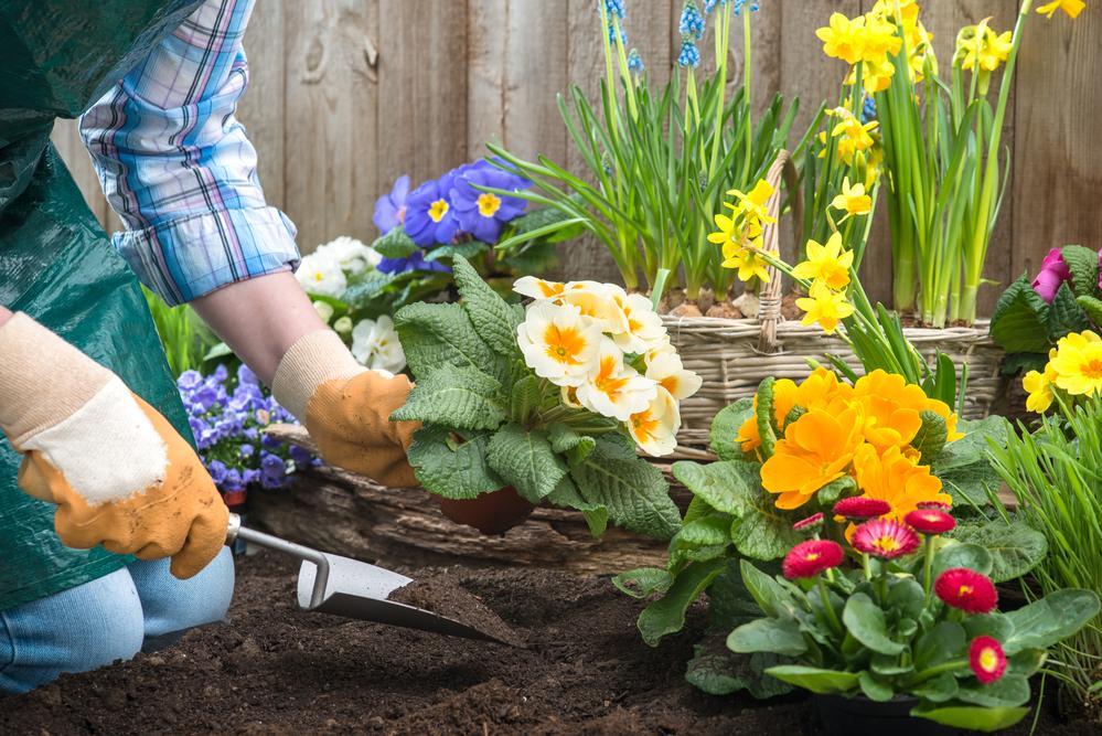 Сегодня можно работать с растениями / фото ua.depositphotos.com