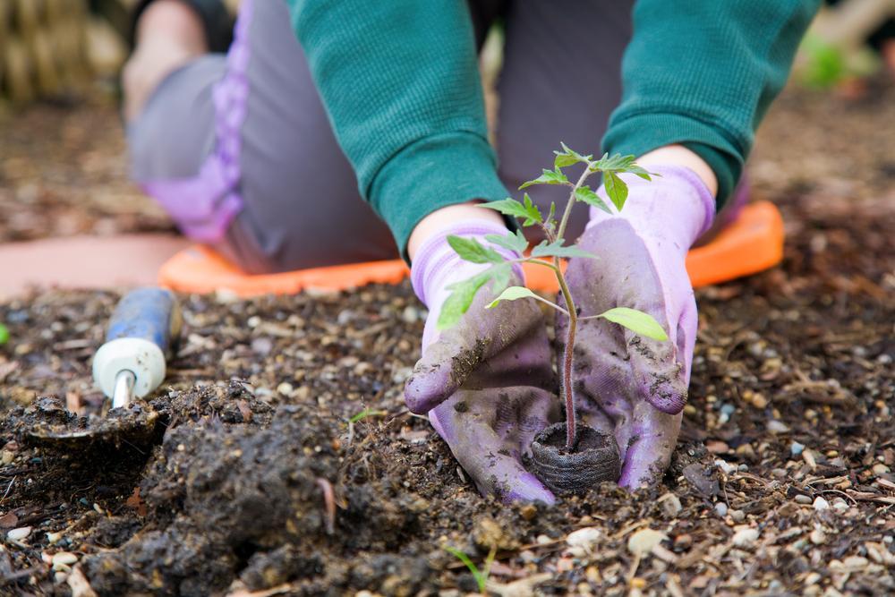 Місячний посівний календар по днях на квітень / фото ua.depositphotos.com