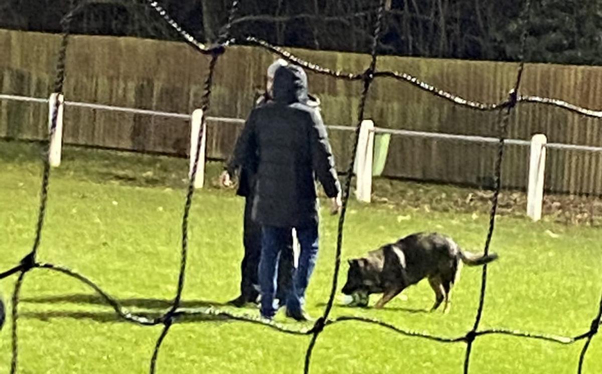 Собака, из-за которой не смогли остановить игру / фото twitter.com/foxyland9