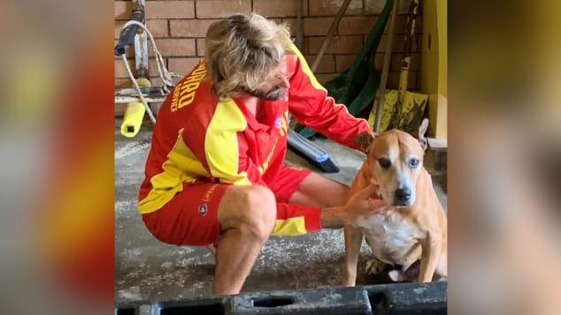 Через три часа после того, как была поднята тревога, Симпсонаобнаружили / фото Surf Life Saving Queensland / Twitter
