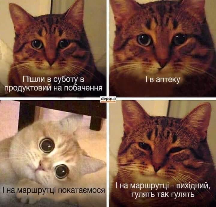 Мемы 2020 года про котов / фото из соцсетей