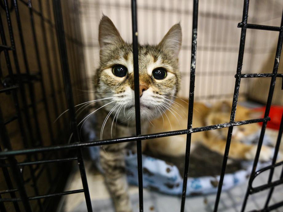 Австралієць увірвався до притулку для тварин / фото kievpost.com.ua