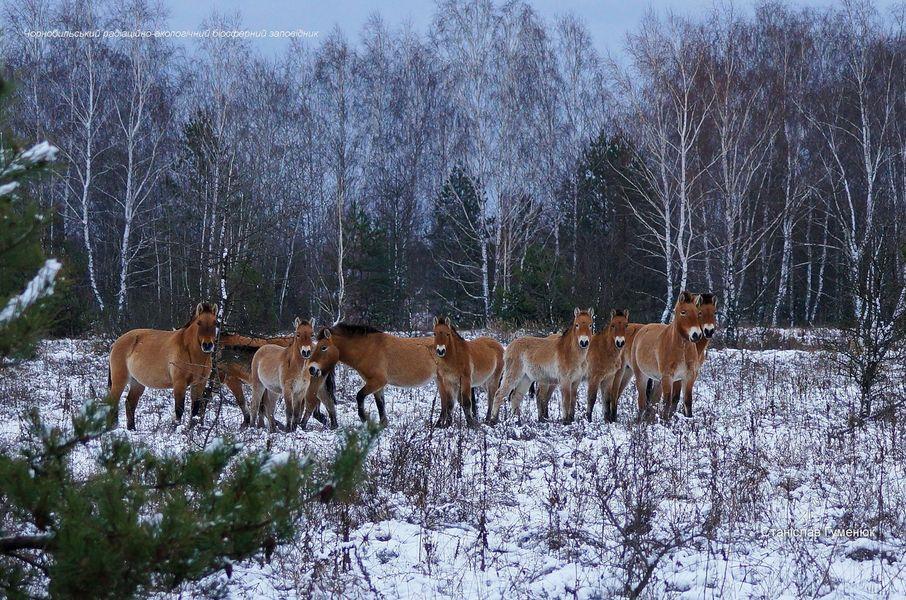 Лошади стоят на заснеженном поле / фото Станислав Гуменюк