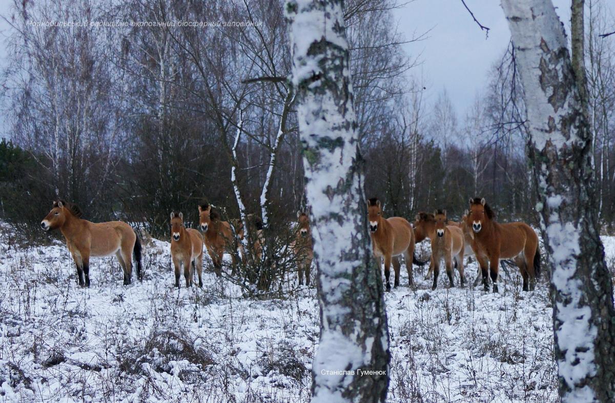 фото Станислав Гуменюк