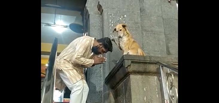 Некоторые посетители подставляют собаке голову / Скриншот