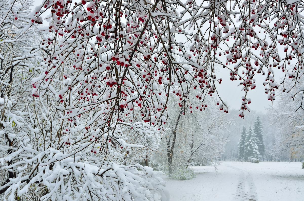 В Украину возвращаются морозы и снег / Фото ua.depositphotos.com