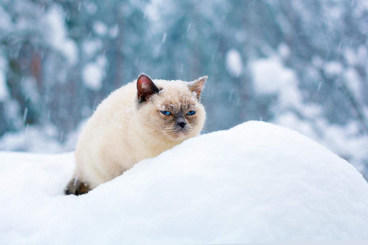 Синоптик прогнозирует мороз и снег в эти выходные / Фото ua.depositphotos.com