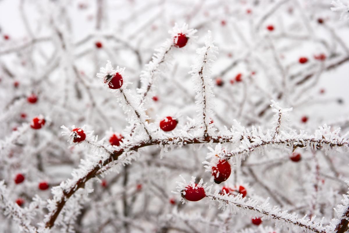 В Украину движется новое похолодание / Фото ua.depositphotos.com