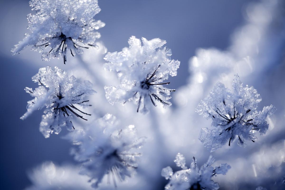 Сегодня отмечается Всемирный день снега / фото ua.depositphotos.com