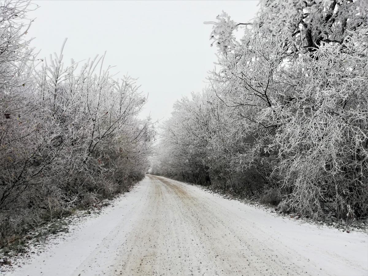 Зимняя сказка на Буковине / фото Марина Григоренко