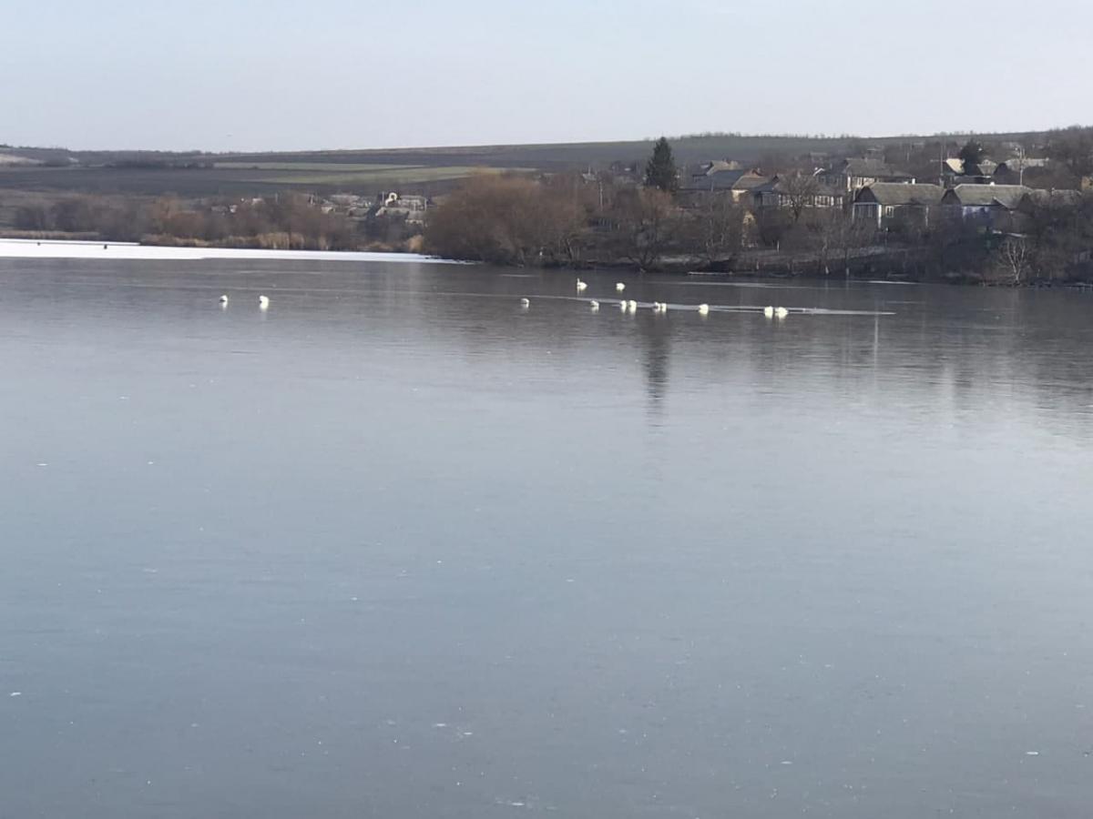 Всего спасли 16 лебедей \ фото od.dsns.gov.ua