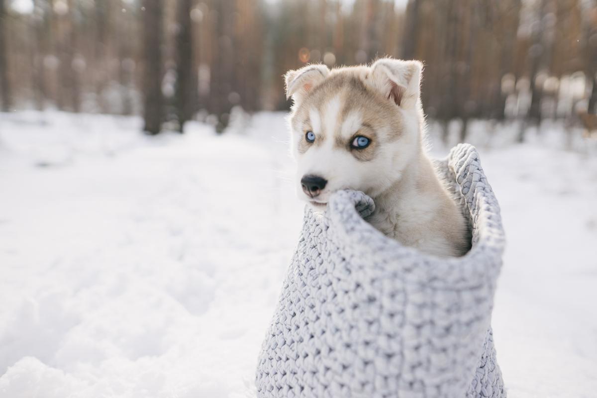 Завтра в Украине будет морозно и почти без осадков / фото ua.depositphotos.com