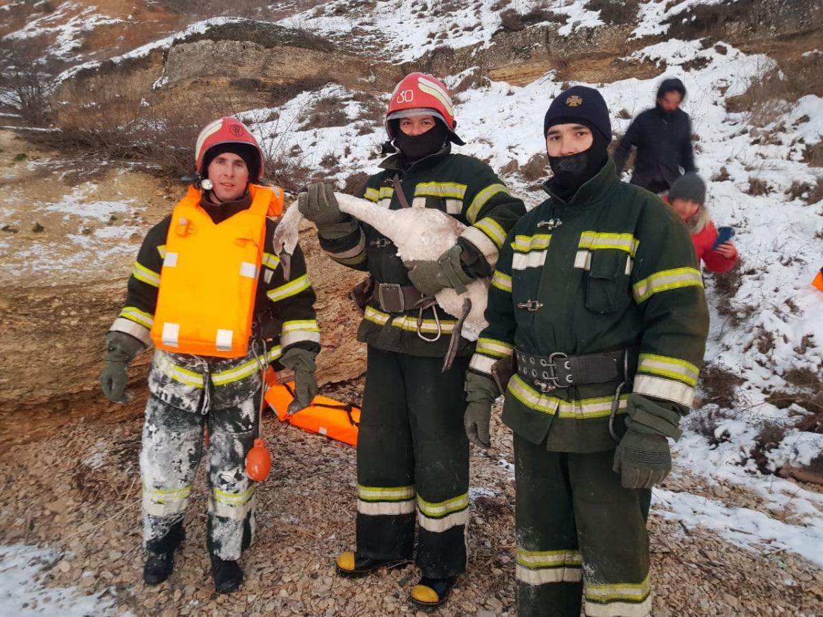 Лебеді опинилися в крижаній пастці / фото od.dsns.gov.ua