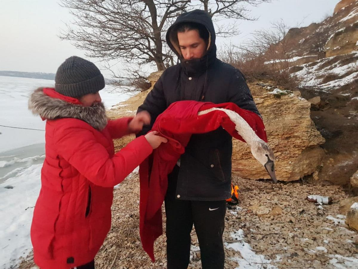 Спасенных птиц передали волонтерам / фото od.dsns.gov.ua