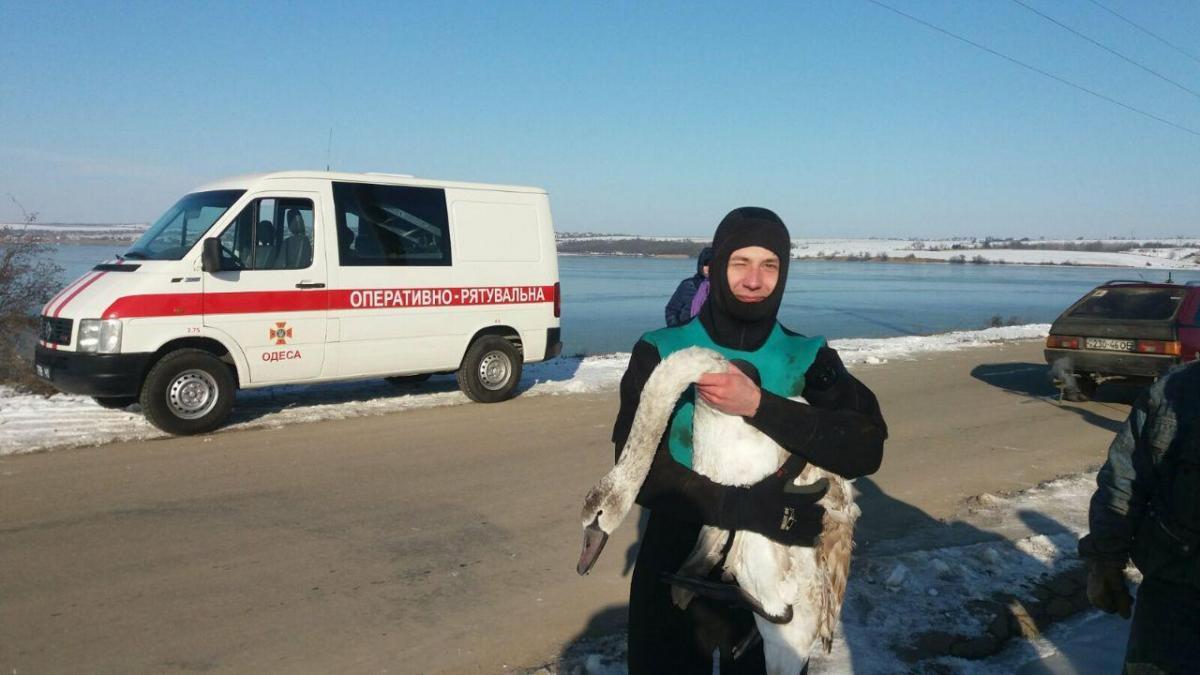 Для спасения лебедя задействовали водолазов / фото od.dsns.gov.ua