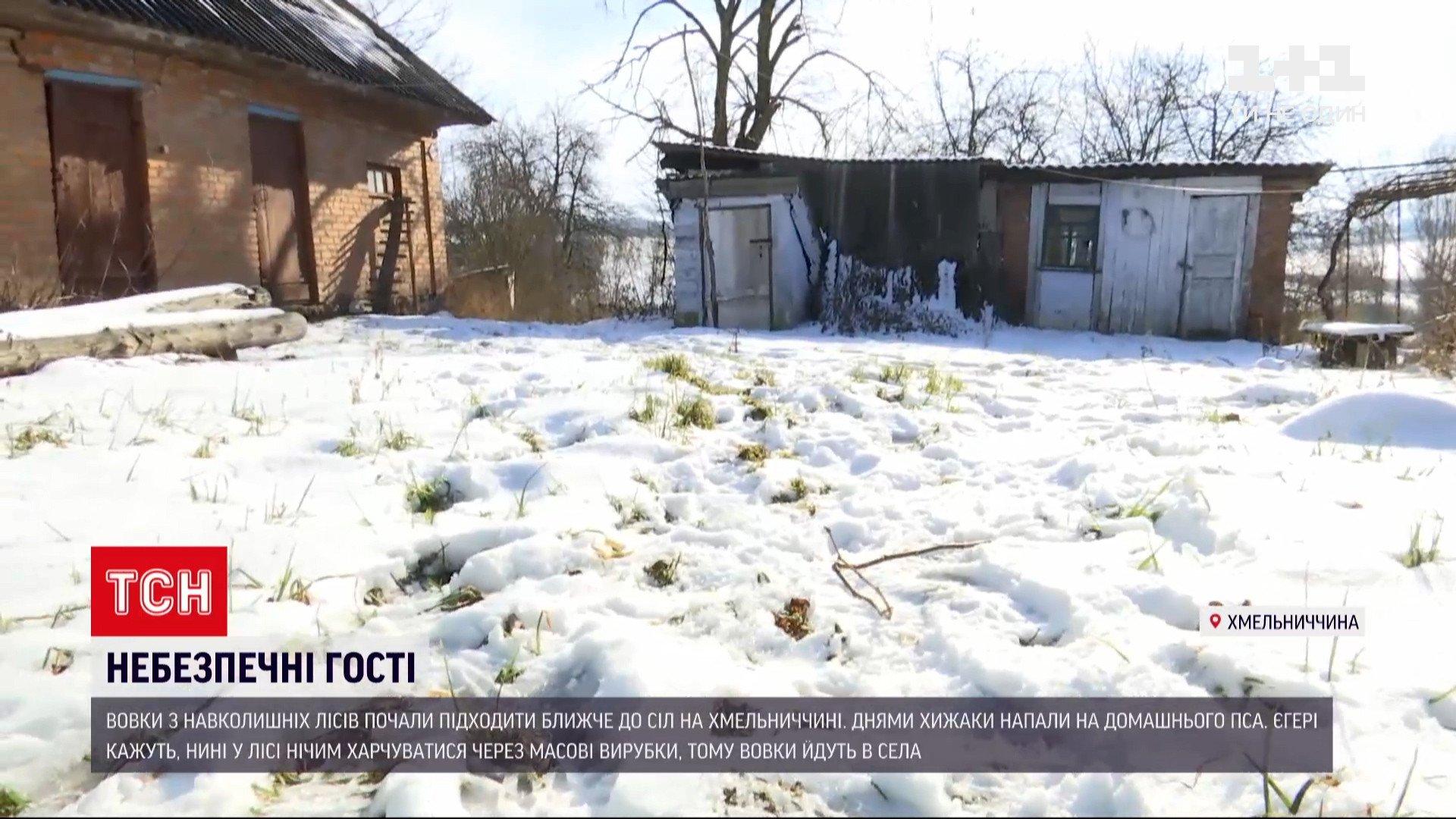 Слідивовків знайшли біля самих хат/ скріншот з відео