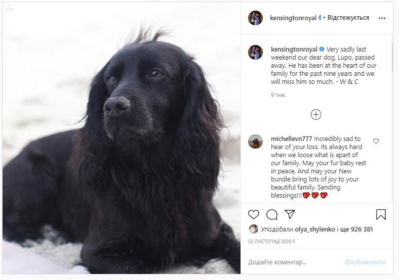 Пес Лупо, который прожил с герцогами Кембриджскими восемь лет / фото instagram.com/kensingtonroyal