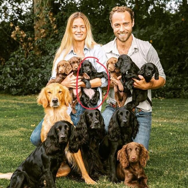 У герцогов Кембриджских новый пес / фото instagram.com/jmidy