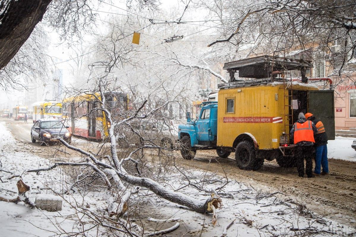 Два человека пострадали при падении деревьев \ фото УНИАН
